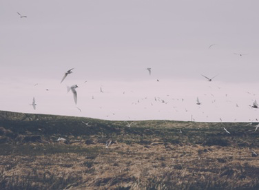 image of sea gulls flying over land