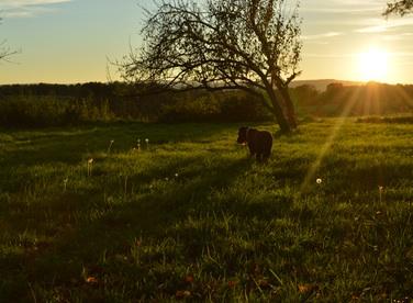image of sun setting on field
